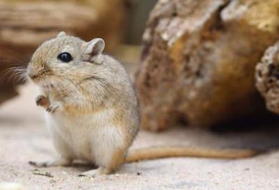 SansaraAra - Укол в мышь
